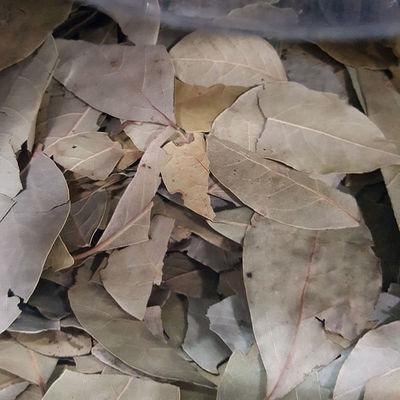 Laurier sauce en feuille - La Paillote Dauphinoise - VOIRON